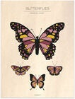 Frank&Poppy Poster Butterflies Vintage 40x50, Rosa